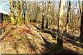 NX4959 : Oak Trail by the Stane Dyke by Billy McCrorie