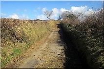 SX2975 : Lane from Uphill by Derek Harper