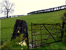 H4570 : Rusty gate, Lissan by Kenneth  Allen