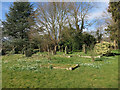 TL4478 : Snowdrops in St Andrew's cemetery by Hugh Venables
