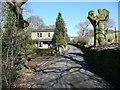 SE0325 : Pollarded tree, Ellen Royd Lane, Midgley by Humphrey Bolton
