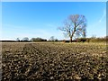 SP8009 : Farmland, Kimble by Andrew Smith