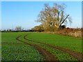 SP8210 : Farmland, Stoke Mandeville by Andrew Smith