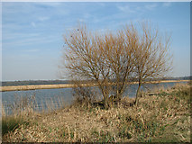 TG3504 : Young willow trees beside the river by Evelyn Simak