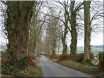 SU5751 : Malshanger Lane by Robin Webster
