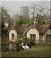 TQ2979 : Pelicans, St James Park by Derek Harper