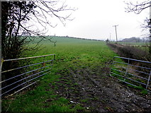 H6059 : An open field, Green Hill Demesne by Kenneth  Allen