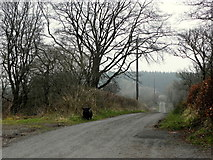 H6160 : Greenhill Road by Kenneth  Allen