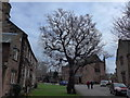 NY3955 : Cathedral Close, Carlisle: mid February 2015 (a) by Basher Eyre