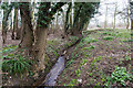 TL1444 : Colemoreham Spinney by David P Howard