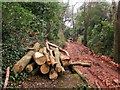 SX9065 : Log pile, Chapel Hill Pleasure Grounds by Derek Harper
