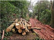 SX9065 : Log pile, Chapel Hill Pleasure Grounds by Derek Harper
