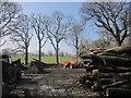 SX2787 : Forest work near Coombekeale by Derek Harper