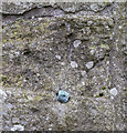 H2246 : Bench Mark, Devenish Island by Rossographer