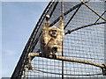 SH8378 : Jake the Lar Gibbon by Richard Hoare