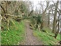NT9048 : Footpath above the River Tweed by Graham Robson