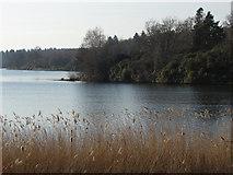 SU9768 : Virginia Water, Windsor Great Park by Alan Hunt