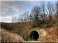 SD8110 : Tunnel Under ELR Embankment near Pimhole by David Dixon