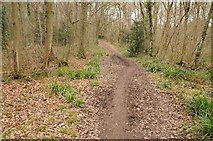SO6828 : The Daffodil Way, Dymock Wood by Philip Halling