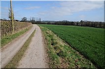 SO6931 : Daffodil Way near Shakesfield by Philip Halling