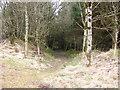 SN9915 : Taff Trail leading down towards Cantref Reservoir by John Light