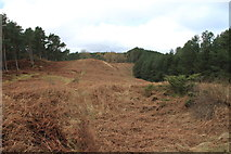 NJ3165 : A clearing in the woods on Binn Hill by Alan Hodgson