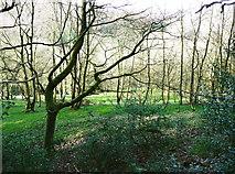 SE0722 : Field adjoining North Dean Wood by Humphrey Bolton