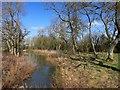 SP6713 : Stream in a Glade by Des Blenkinsopp