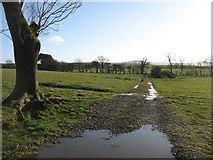 NY3841 : Farmland and track east of Sebergham by David Purchase
