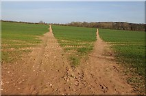 SO6731 : A choice of footpaths by Philip Halling