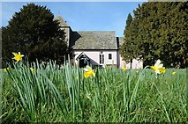 SO6631 : Daffodils and Kempley church by Philip Halling