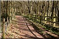 SK6670 : Footpath in Walesby Forest by Graham Hogg