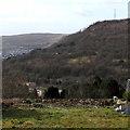 SS9994 : Wooded hillside, Llwynypia by Jaggery