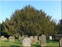 TQ3632 : St Margaret, West Hoathly: churchyard (XIV) by Basher Eyre