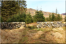 NX5071 : Path from Dunkitterick Cottage by Billy McCrorie