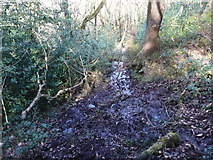 SE0722 : Footpath in North Dean Wood by Humphrey Bolton