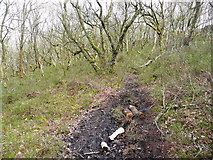 SE0722 : A muddy patch on the path through North Dean Wood by Humphrey Bolton