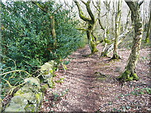 SE0722 : Footpath alongside the old boundary wall of North Dean Wood by Humphrey Bolton