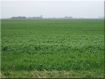 TF2714 : Farmland south of Queen's Bank by JThomas