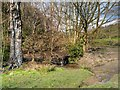 SD6527 : Small Stream in Witton Country Park by David Dixon