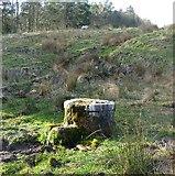 NU0012 : Well beside Prendwick Burn by Russel Wills