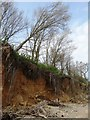 TM0614 : Coastal erosion at Cudmore Grove by Neil Theasby