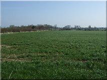 NZ1769 : Farmland, Black Callerton by JThomas