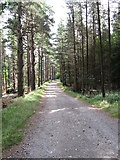J3629 : Forest track leading to Thomas's Mountain Quarry from the Glen River by Eric Jones