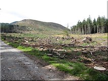 J3629 : Cut-over section of the Donard Forest by Eric Jones
