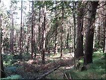 J3629 : Tree debris on the floor of the Donard Forest by Eric Jones