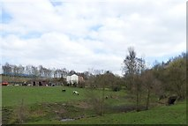 SJ9694 : Grazing land off Station Road, Godley by Gerald England