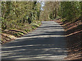 TQ0851 : Shere Road, West Horsley by Alan Hunt