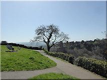 ST5673 : Tree over Avon Gorge by Steve Barnes