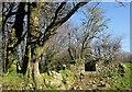 SX2181 : Ruin near Austle by Derek Harper
